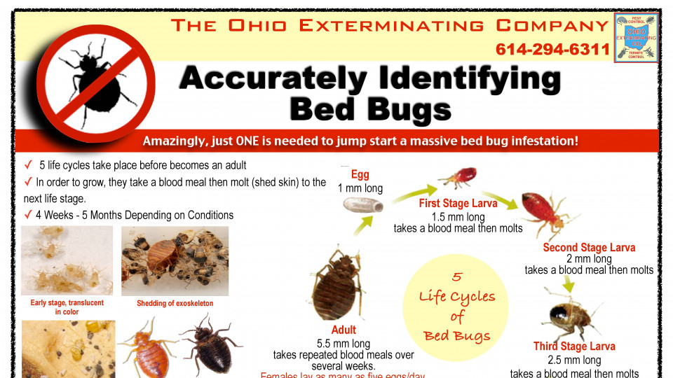 Bed Bug Pocket Guide