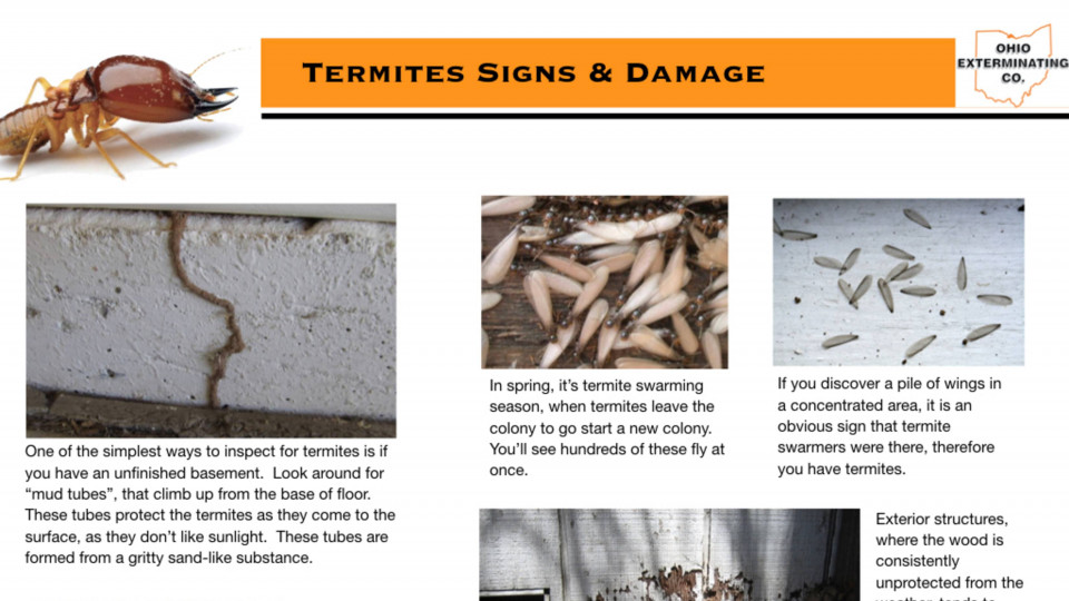 Termite Signs & Damage
