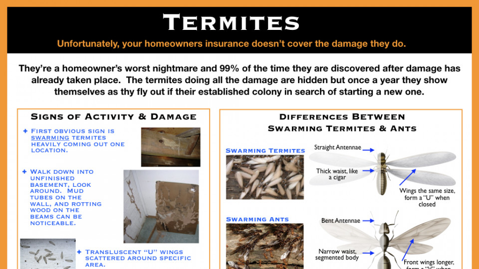 Swarming Termites and Termite Damage Examples
